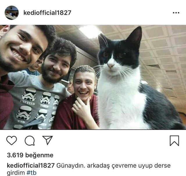 istanbul-universitesi-capa-tip-fakultesinin-fenomen-kedisi-sansli-maskot-haline-geldi